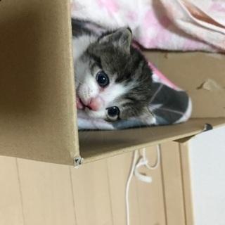 子猫ちゃんを室内のみで飼って頂ける里親さんを探しています