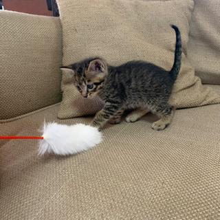 仔猫ちゃんの里親募集します。