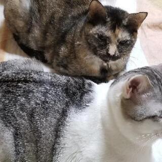 【募集中】猫の里親様募集します
