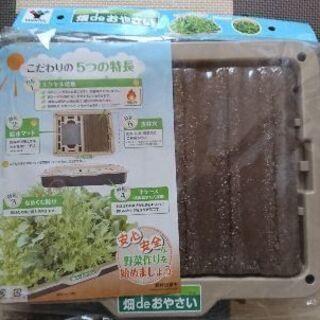 家で無農薬野菜を育てよう!かんたん水耕栽培キット