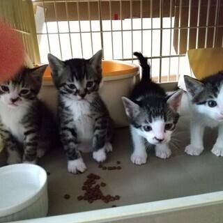 4/25生子猫4匹と母猫全員トライアルへ