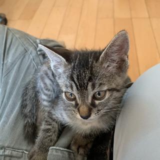 7月で1歳になる猫の里親さん無事に見つかりました。ありがと…