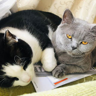 二匹の猫の親里を探します。
