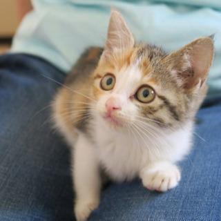 美人さんの三毛猫ちゃん
