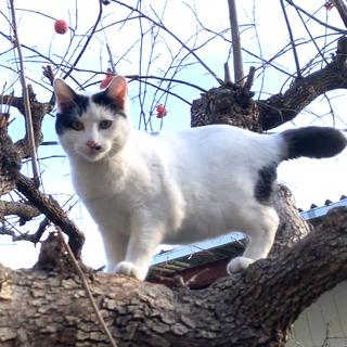 飼い猫を探しています。