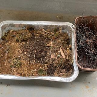 土と針金(盆栽・園芸・庭いじり・ガーデニング)