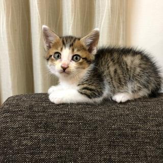 里親募集 1ヶ月半の子猫 オス