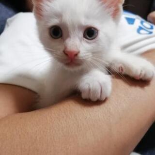 白猫ちゃんです。