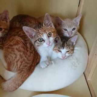 元気な子猫達の里親さんを募集します