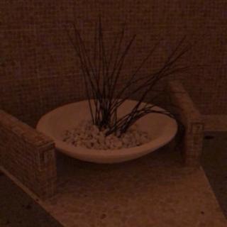 大きなお皿と石と植物?