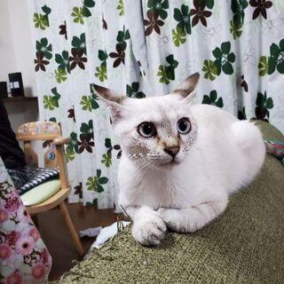 4ヶ月3~の猫ちゃんの里親さん募集