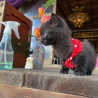 黒子猫クッキーちゃん