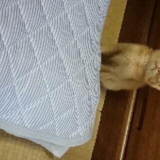 野良子猫保護しました