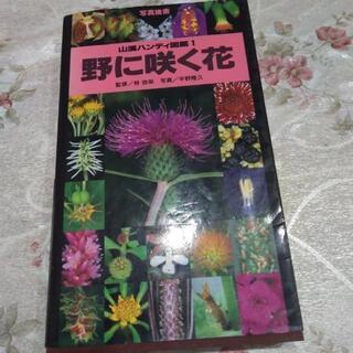 野に咲く花山渓ハンディ図鑑1