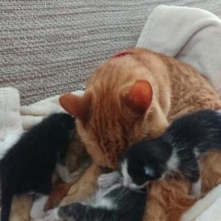母親のいない子猫