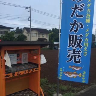 里山メダカ メダカ無人販売所 黒鱗 夜桜 チョコレート幹之 松井...