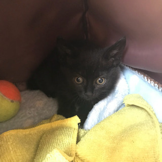 黒猫の子猫(お話し中の為一旦募集中止)