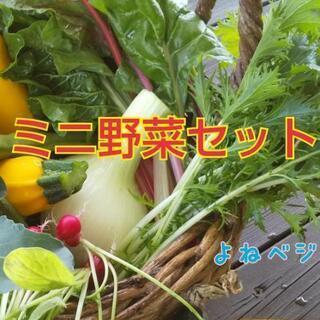ミニ野菜セット【よねベジ】