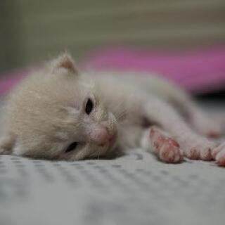 5月9日生まれの子猫里親募集