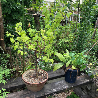 《取引中》鉢植え 花 多肉植物 観葉植物 素焼き鉢 など