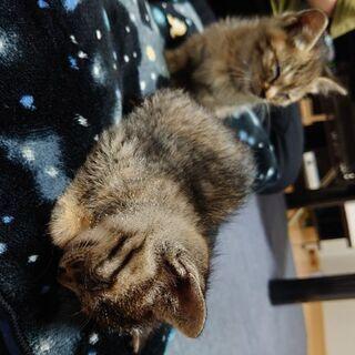 【里親募集】1ヶ月くらいの子猫2匹