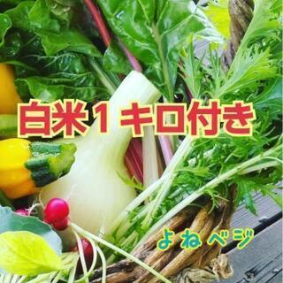 6/17~‼️白米&お野菜セット【よねベジ】