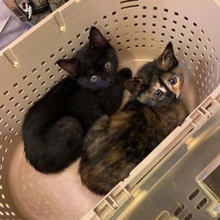 保護猫 * 生後2ヶ月 *女の子