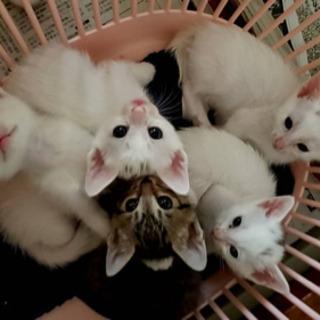子猫の里親になっていただける方を探しています!