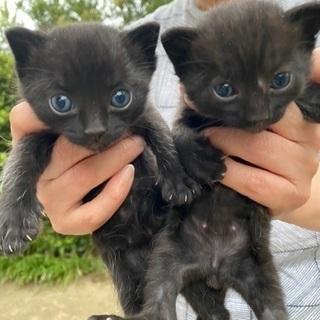 黒猫(仔猫、性別不明)