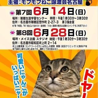 6/14(日) 猫の譲渡会 in 名古屋市瑞穂区生涯学習センター