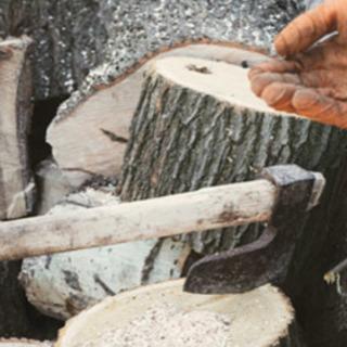 木切り、樹木の伐採