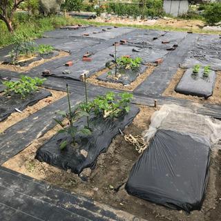 🌱ちょこっと農業『枚方茄子作5丁目農園』新規募集します🌱