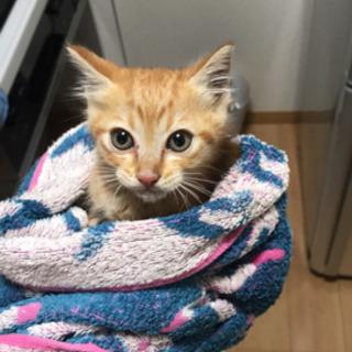 【決定しました】飼育放棄された子猫
