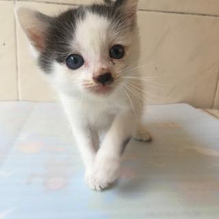 1ヶ月のかわいい子猫