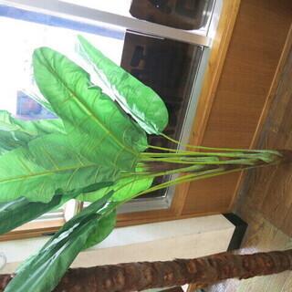 人工観葉植物です