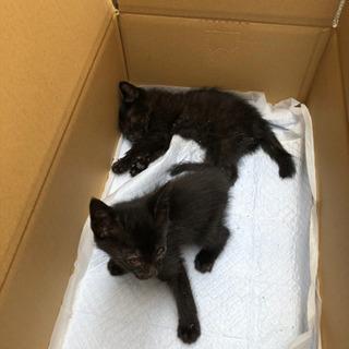 子猫(黒)2匹