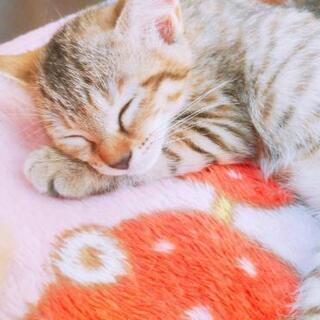 生後2ケ月の仔猫(三匹里親さん決定しました♪)