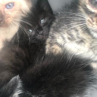 幼い子猫ちゃんを家族に迎えて下さい。
