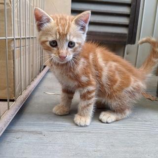 【受付終了】4匹の保護子猫(推定生後1か月半)の里親を募集