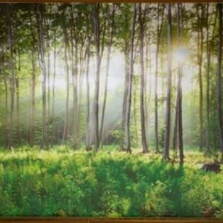 壁紙3D 緑の森自然 リビングルームの寝室