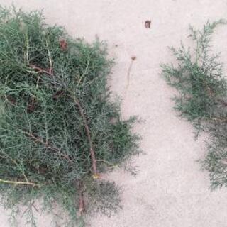 剪定した木々