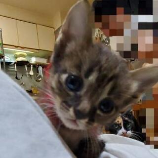 可愛い子猫の里親募集(代理)