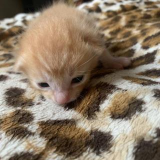 5/20産まれの仔猫ちゃんの里親募集してます!