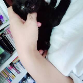 「甘えたさん」の黒仔猫 (生後1ヶ月程度)