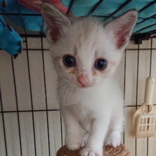 小さな仔猫1か月