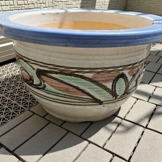②睡蓮鉢 ビオトープ メダカ 植木鉢