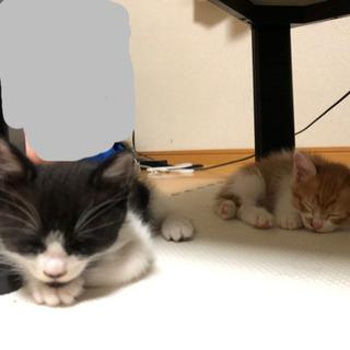 推定生後1ヶ月の子猫2匹