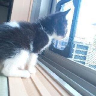 1ヶ月位のオス子猫ちゃん