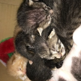 5月31日に自宅で6匹子猫生まれました。(野良ではありません!)