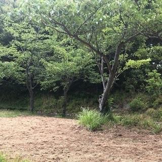 樹木剪定や草刈作業のできる方を募集(造園業経験者歓迎)
